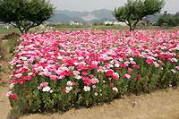 花畑の様子
