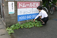 謎のど根性植物
