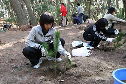 松の苗木の植樹