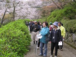 桜を楽しむ興山園もりもりクラブ