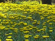 満開の花畑