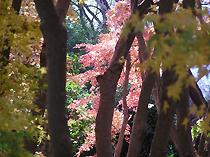 興山園の紅葉
