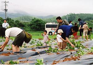 苗植え体験の様子
