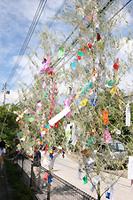 公民館の横に設置された竹