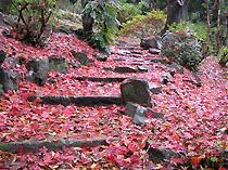 落ち葉でできた真っ赤なじゅうたん