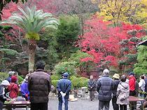 色鮮やかな木々