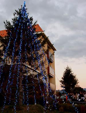 看護大のクリスマスツリー