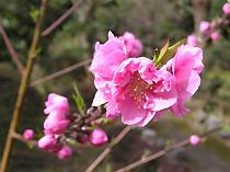 興山園の花