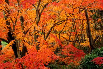 真っ赤に色づいた紅葉