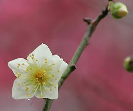 古賀グリーンパークの花