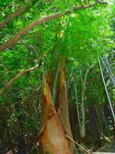 竹の生えた樹木