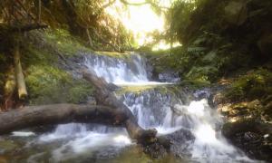 清滝の癒しスポット