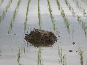 鳥の巣発見!