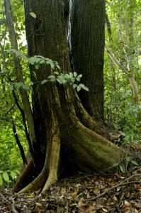 地に根を張る樹木