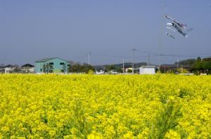 鮮やかな黄色が美しい