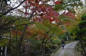 秋色に染まる興山園