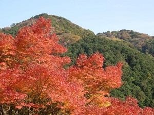 興山園の美しい紅葉l