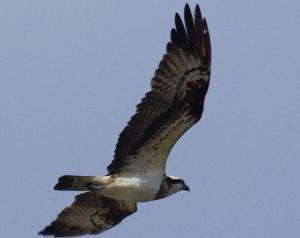 青空を颯爽と飛ぶ