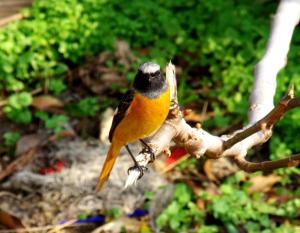 こんなかわいらしい鳥の姿も