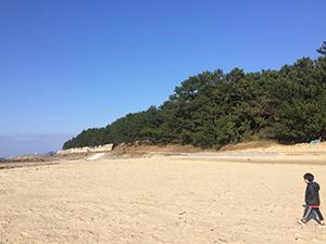 美しい古賀の海岸