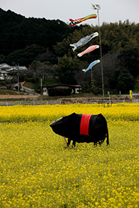 黄色いじゅうたんの上で牛のオブジェものんびりと