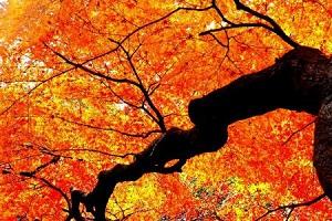 息を呑むほど美しい紅葉