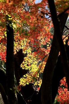 美しい紅葉にうっとり