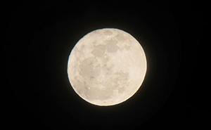 「月を観る会」の「月」
