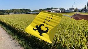 青空に映える黄色の旗